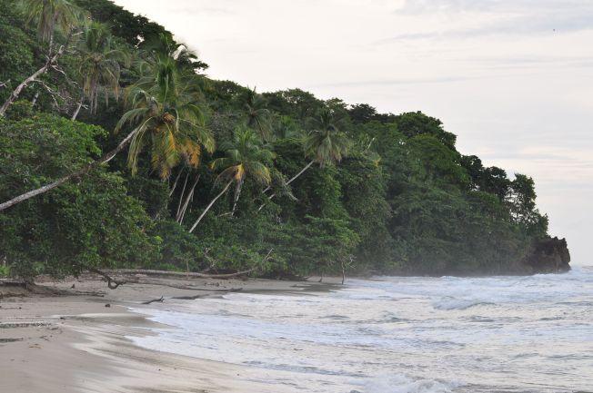 Playa de Cocles en Puerto Viejo de Limón. Costa Rica